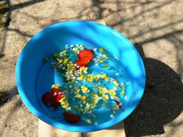 Cvjetna nedjelja i blagoslov grančica
