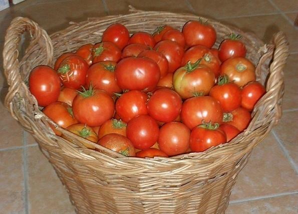Rajčice – mala crvena srca