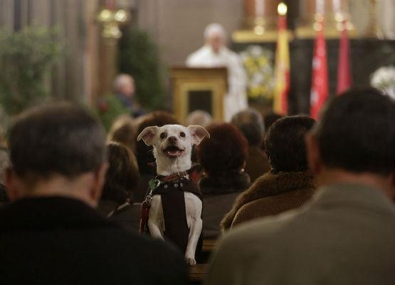 Životinje na bogoslužju?