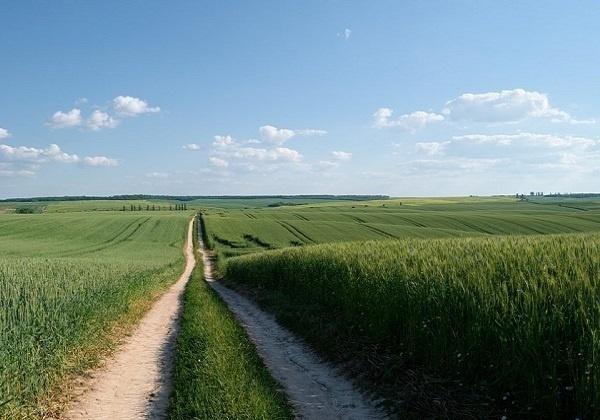 Kakvo smo tlo? – uz evanđelje 15. nedjelje kroz godinu (A)