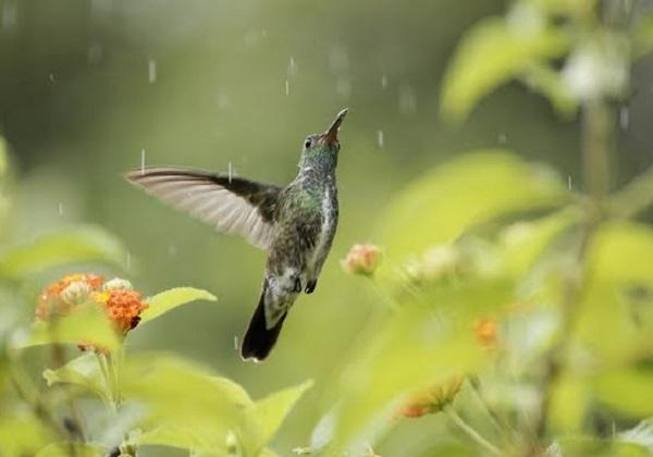 Za let si, dušo, stvorena…