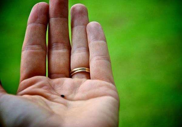11. nedjelja kroz godinu (B) – prijedlog za liturgijsko pjevanje