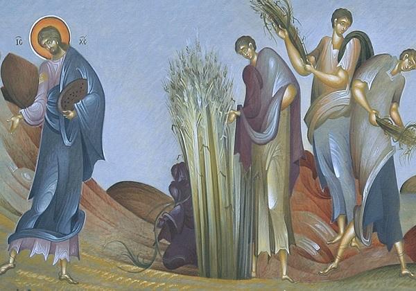 16. nedjelja kroz godinu (A) – prijedlog za liturgijsko pjevanje